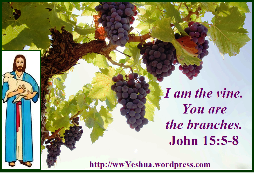Vine-you-are-the-branches-with-jesus
